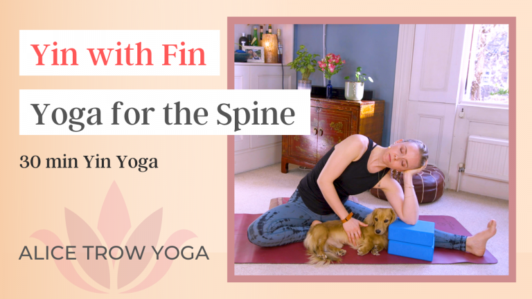 Yin with Fin (Yoga for the Spine)